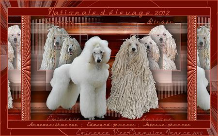 nationale d'elevage caniche 2012